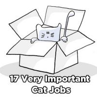 17 Very Important Cat Jobs