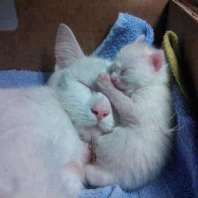 mama and baby love