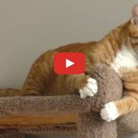 Marmalade The Cat Will Make U Laugh!