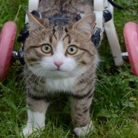 A Cat With Two Wheels Loves His Life to the Full