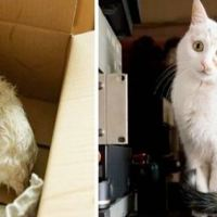 9 Cats Whose Lives Turned To Happiness After Adoption