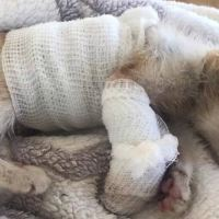 Disfigured Kitten Rescued From a Factory is Transformed by Love