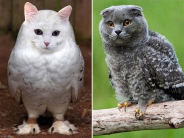 birds-or-owls