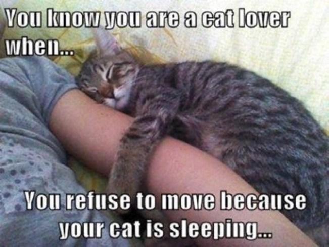 refuse-to-move-lol