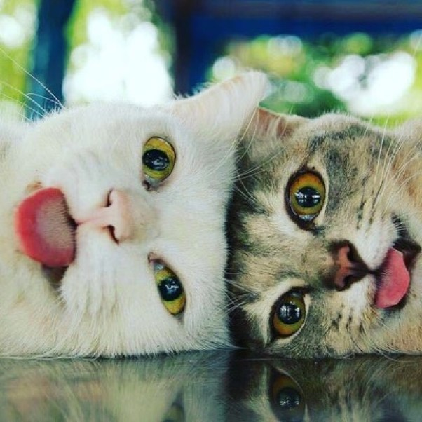 tongues-out-caption