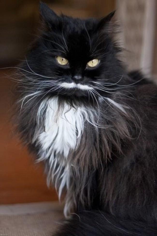 fine-moustache