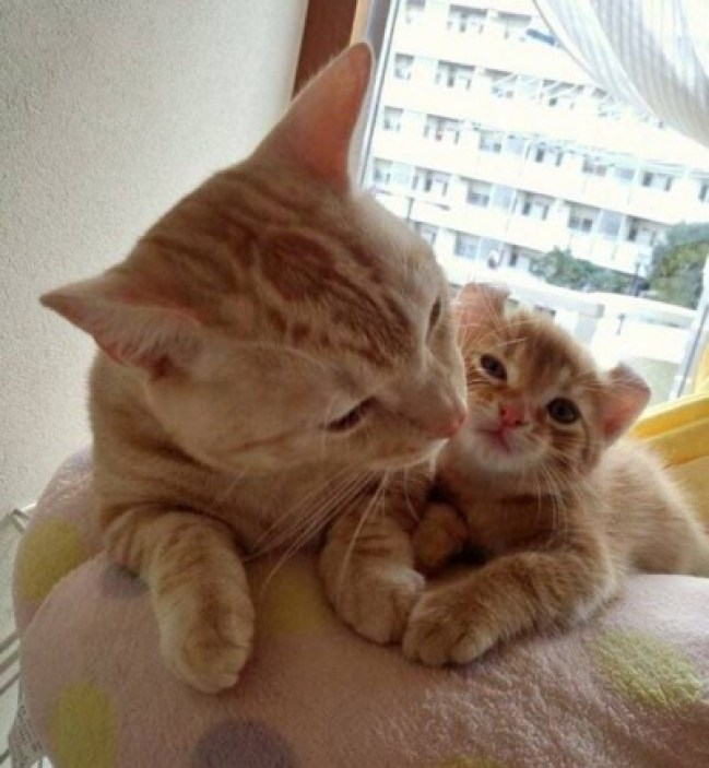 ginger-mama-and-baby