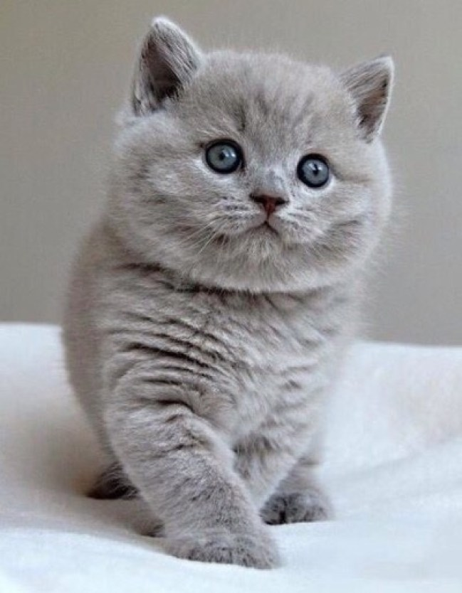 grey-cute-copy