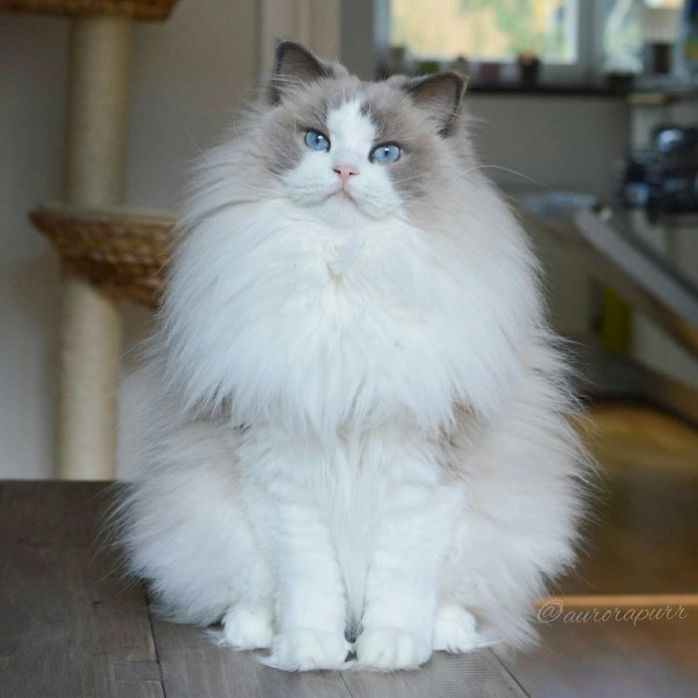 most-beautiful-cats-in-the-world