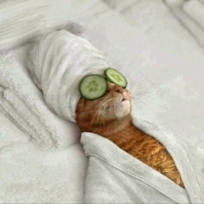 pampered