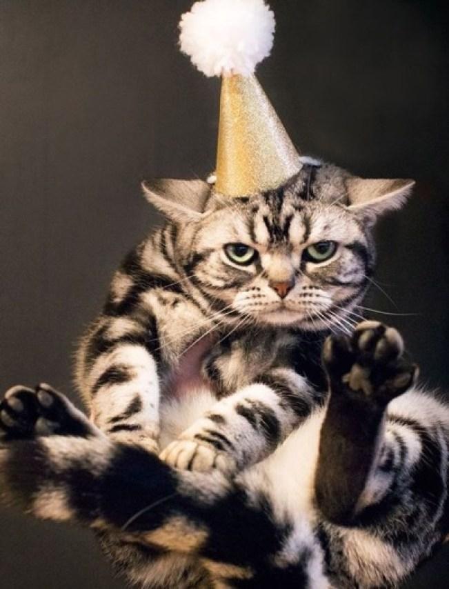 party-cat