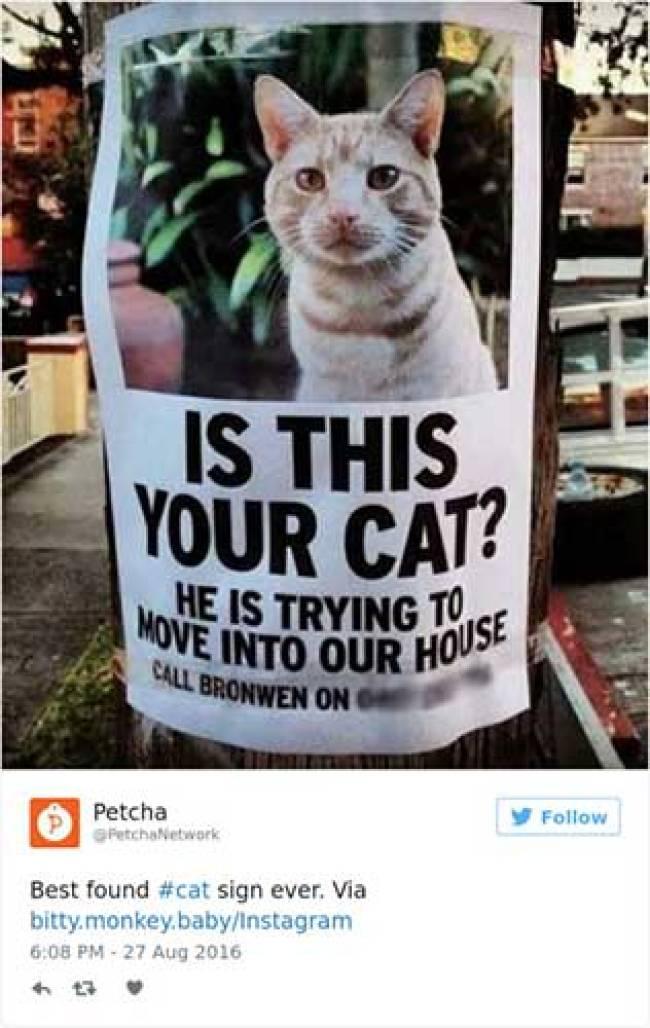 cat tweets 15