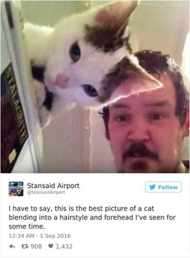 cat tweets 3