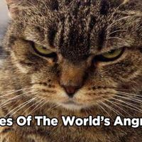 12 Pictures Of The World's Angriest Cats Ever