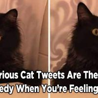 15 Hilarious Cat Tweets Are the Perfect Remedy When You're Feeling Down