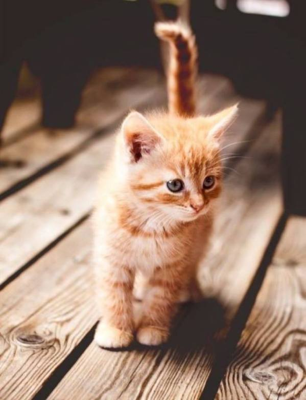 ginger cutie