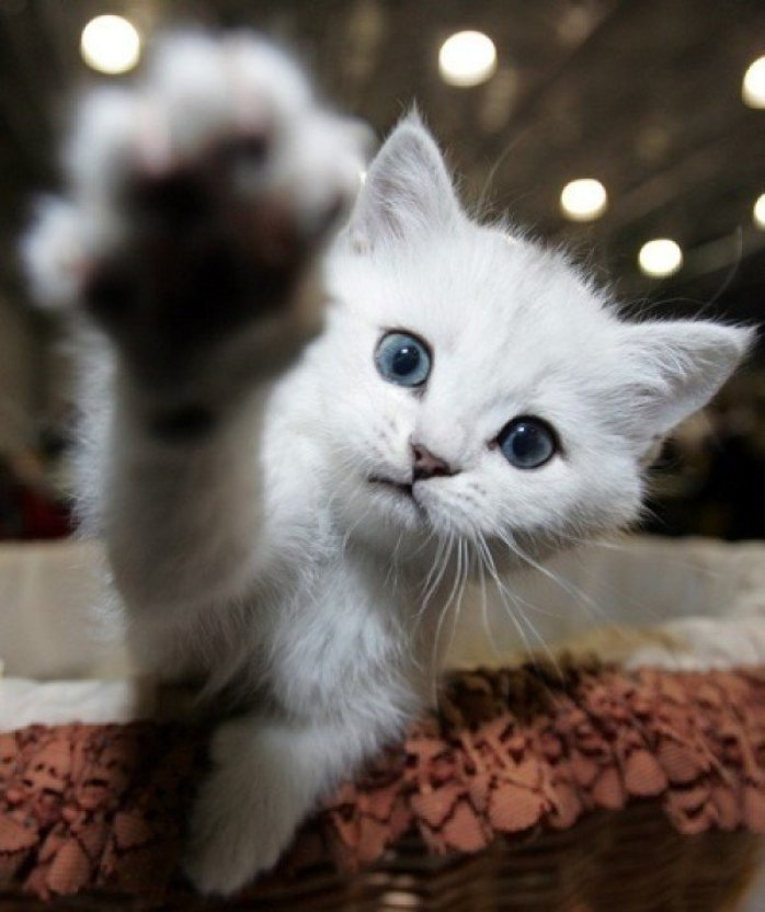 right paw