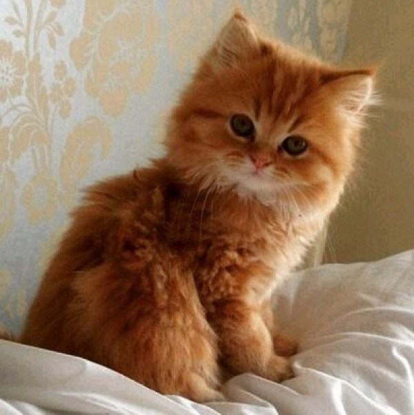 What a ginger cutie!