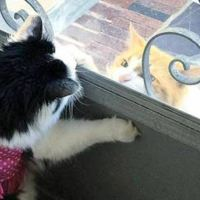 Cat Falls In Love With Kitty Next Door and Visits Her Every Day For 2 Years