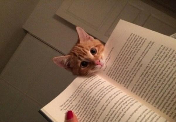 whatcha reading