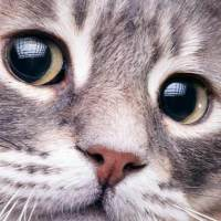 18 Amazing Cat Facts That You Probably Didn't Know