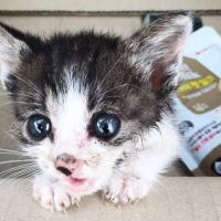 Tiny Stray Kitten Hobbles Up to a Couple Meowing for Love