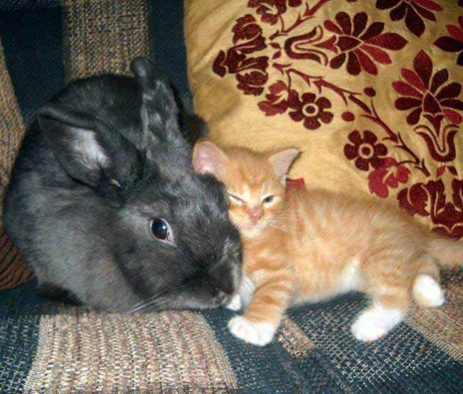 Awesome-kitten-and-his-BFF-!