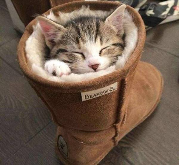 Classic Puss in Boot!