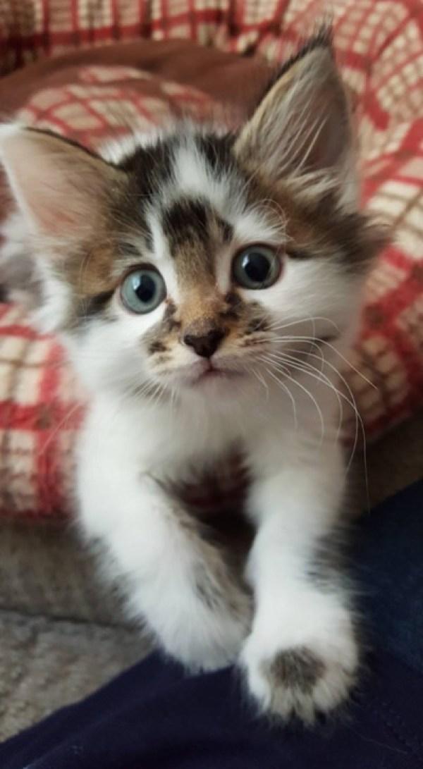 Foster kitten, Daffodil