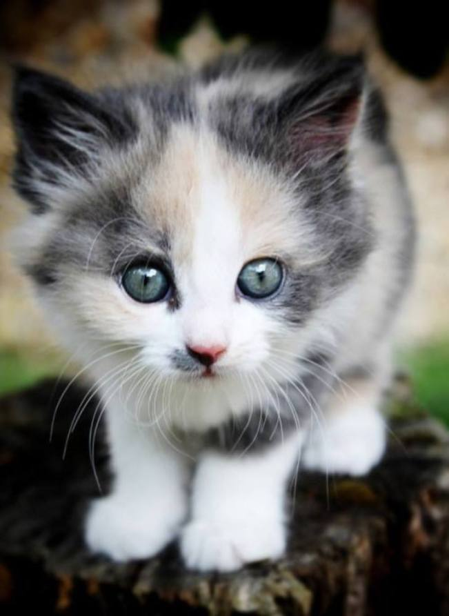 Well hello there little kitty