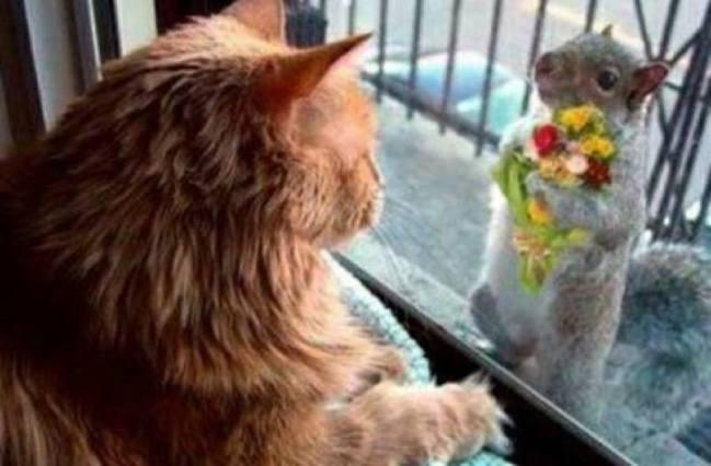 I love you kitty
