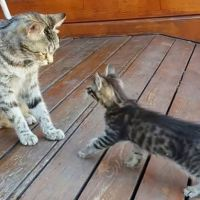 Mama Cat Cleaning Her Kitten By Force