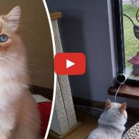 The Moment When a Pet Owner Realized His Cat is a Disney Princess