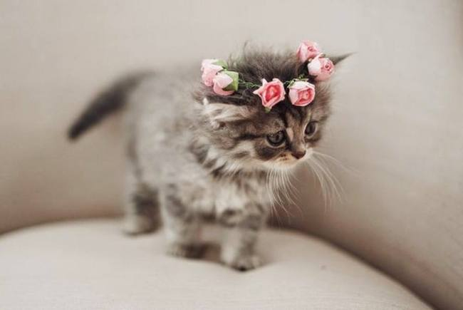 Flower crown for a pretty kitty!