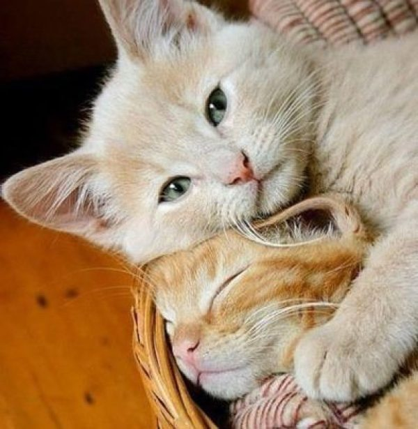 Have you cuddled your kitty today?