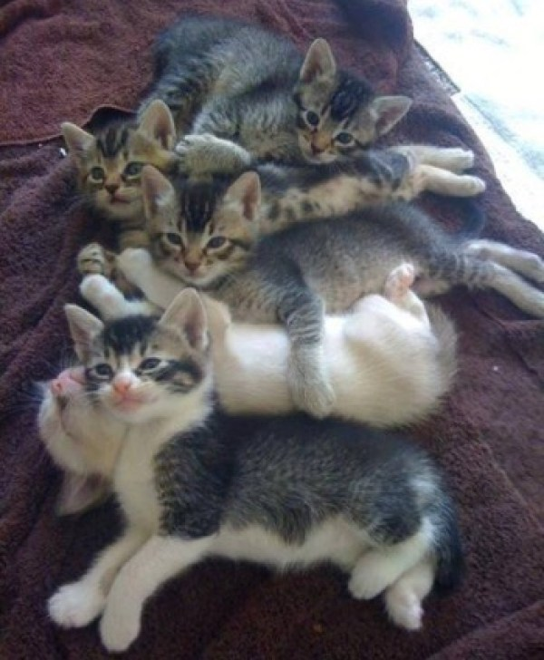 Pile of kittens