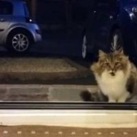 Stray Cat Following and Begging to be Let Inside Had a Very Good Reason