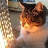 This Cat Loves To Warm His Paws On A Heater Until He Falls Asleep