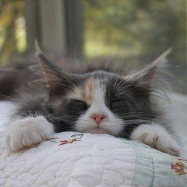 well deserved nap!