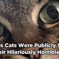 16 Times Cats Were Publicly Shamed For Their Hilariously Horrible Crimes