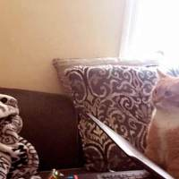 Cat Won't Stop Staring At His Mom After Giving Him Forever Home