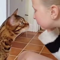 Cats Kissing Their Humans to Show Their Love