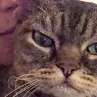 Aggressive Cat Shocks Mom By Becoming A Snugglebug