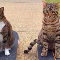 The Most Talented Cats in the World