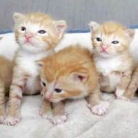 5 Orphaned Ginger Kittens Get Help Just in Time