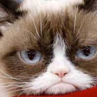 Grumpy Cat: Internet's Most Famous Cat Dies Aged Seven