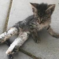 Abandoned Kitten Found Barely Able To Walk With Makeshift Casts