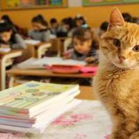 A Stray Cat Enters a Classroom and Transforms the Life of These Students by Deciding to Stay