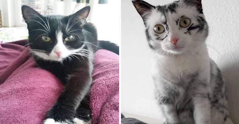 Rescued Cat With Rare Condition Ends Up Changing Colors