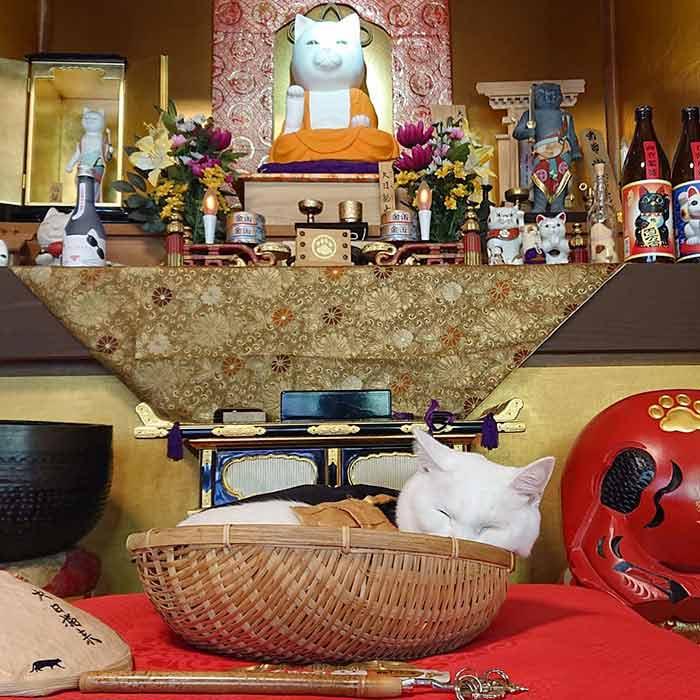 shrine-9